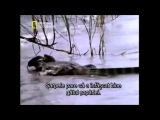 Бои животных.слабонервным не смотреть)))))))))))
